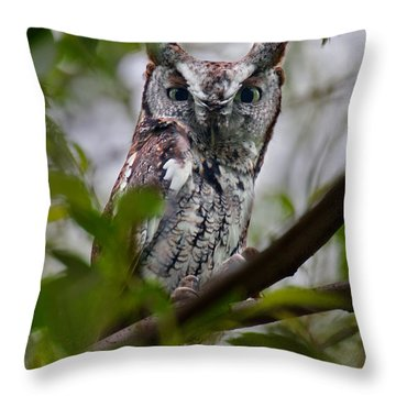 Eastern Screech Owl Throw Pillow by Timothy McIntyre