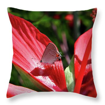 Eastern Tailed Blue Butterfly On Red Flower Throw Pillow