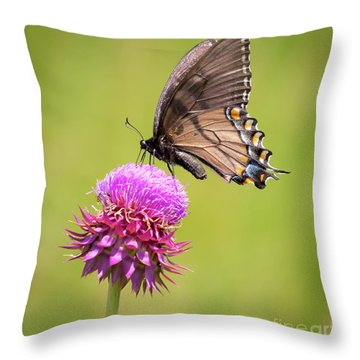Throw Pillow featuring the photograph Eastern Tiger Swallowtail Dark Form  by Ricky L Jones