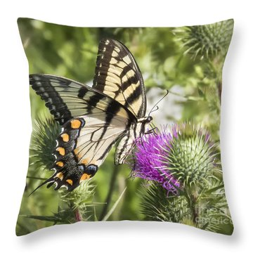 Eastern Tiger Swallowtail Throw Pillow by Ricky L Jones