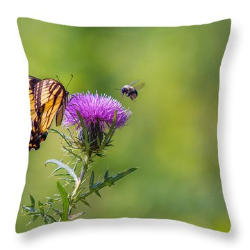 Eastern Tiger Swallowtail Throw Pillow by Rima Biswas