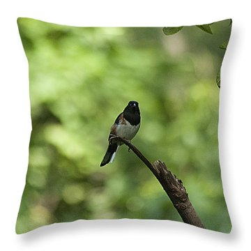 Eastern Towhee 20120707_52a Throw Pillow by Tina Hopkins