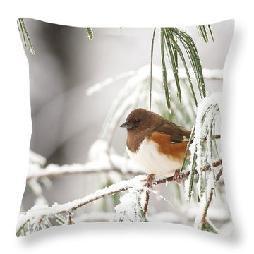 Eastern Towhee In Snowy Pine Throw Pillow
