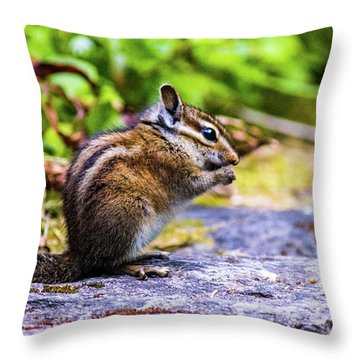 Throw Pillow featuring the photograph Eating Chipmunk by Jonny D