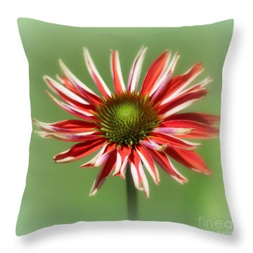 Throw Pillow featuring the photograph Echanacea  by Irina Hays