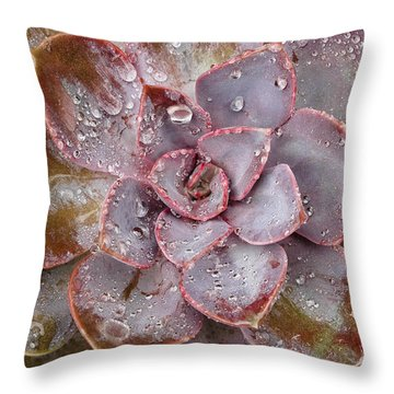 Echeveria Throw Pillow