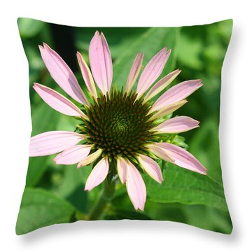 Throw Pillow featuring the photograph Echinacea by Ellen Tully