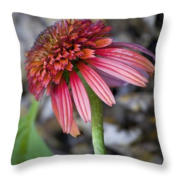 Echinacea Hot Papaya Throw Pillow by Teresa Mucha
