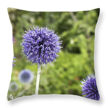 Throw Pillow featuring the photograph Curious Echinop Peeking At The Camera by Helga Novelli