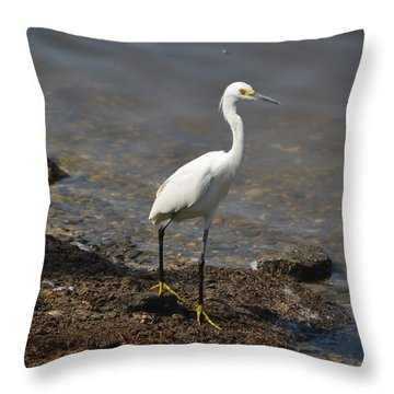 Egret 1 Throw Pillow by Gordon Mooneyhan