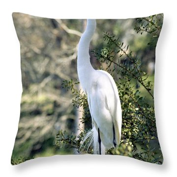 Egret 2 Throw Pillow by Michael Peychich