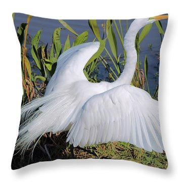 Egret Display Throw Pillow