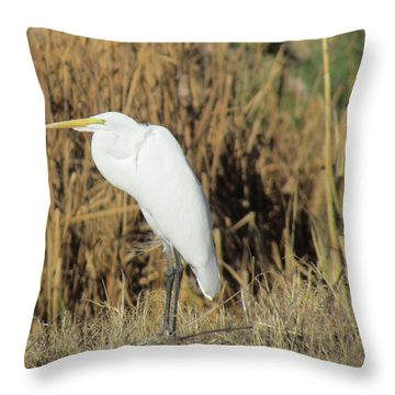 Egret In Grass Throw Pillow by Bonnie Muir