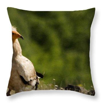 Egyptain Vulture  Throw Pillow