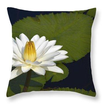 Egyptian Waterlily Throw Pillow