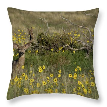 Eight Point Buck In The Grass Lands Of The Great Sand Dunes Throw Pillow