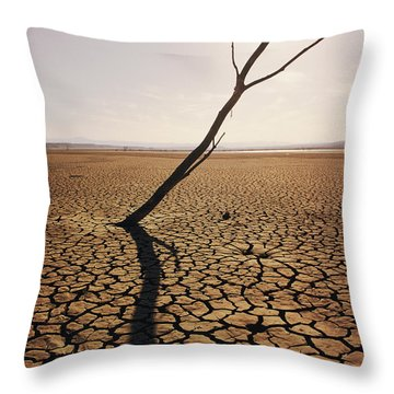 El Mirage Snag Throw Pillow by Larry Dale Gordon - Printscapes