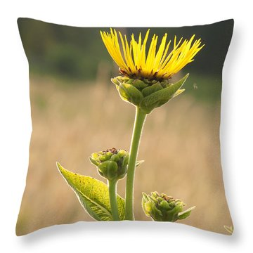 Elecampane- Tears Of Helen Of Troy Throw Pillow