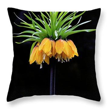 Throw Pillow featuring the photograph Elegance by Elvira Butler
