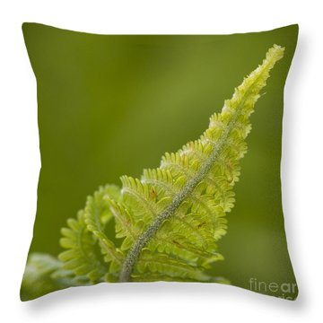 Elegant Fern. Throw Pillow by Clare Bambers