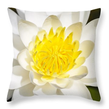 Elegant Lotus Throw Pillow by Christopher L Thomley