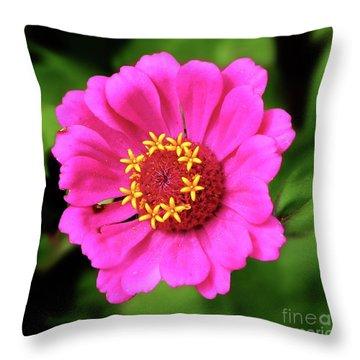 Elegant Zinnia Flower Pink Tones Throw Pillow