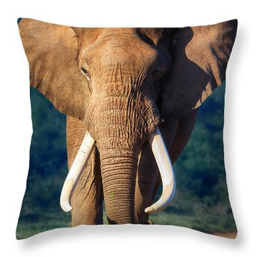 Elephant Approaching Throw Pillow