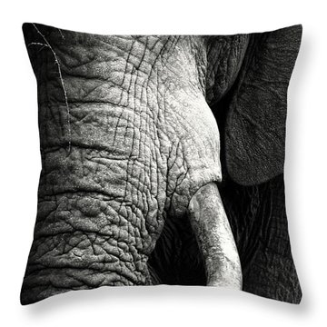 Elephant Close-up Portrait Throw Pillow
