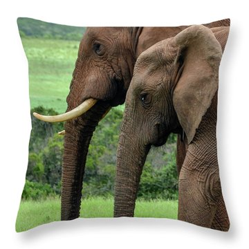 Elephant Couple Profile Throw Pillow