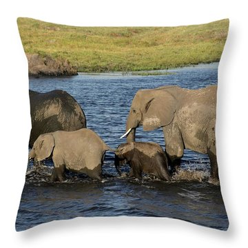 Elephant Crossing Throw Pillow