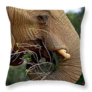 Elephant Curl Throw Pillow