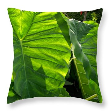 Elephant Ear 448 Throw Pillow