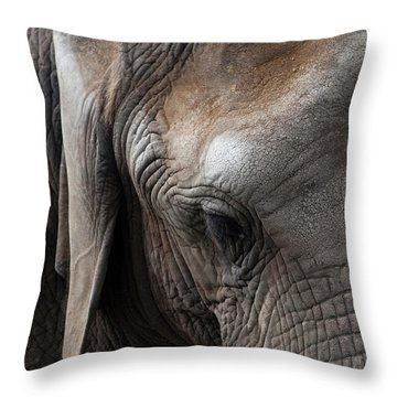 Elephant Eye Throw Pillow by Lorraine Devon Wilke