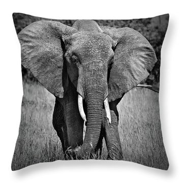Throw Pillow featuring the photograph Elephant In Amboseli by Antonio Jorge Nunes
