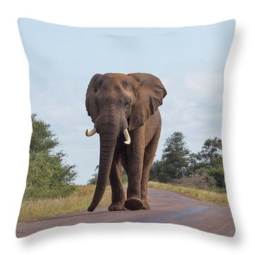 Elephant In Kruger Throw Pillow