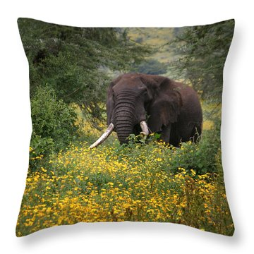 Elephant Of The Crater Throw Pillow