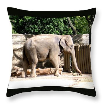 Throw Pillow featuring the photograph Elephant by Rose Santuci-Sofranko