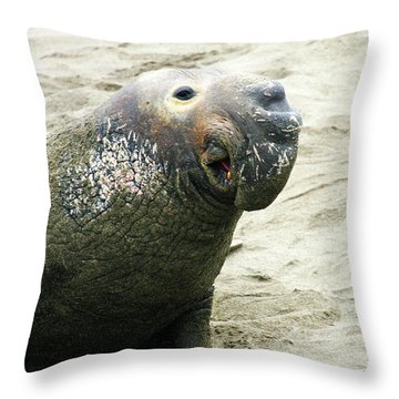 Throw Pillow featuring the photograph Elephant Seal by Anthony Jones
