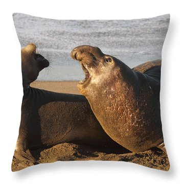 Throw Pillow featuring the photograph Elephant Seals Mating by Max Allen