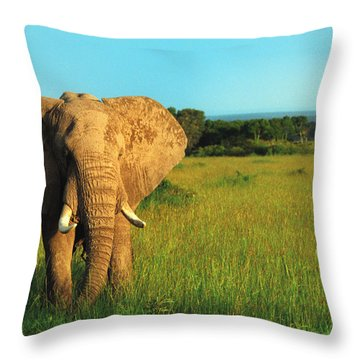 Elephant Throw Pillow by Sebastian Musial