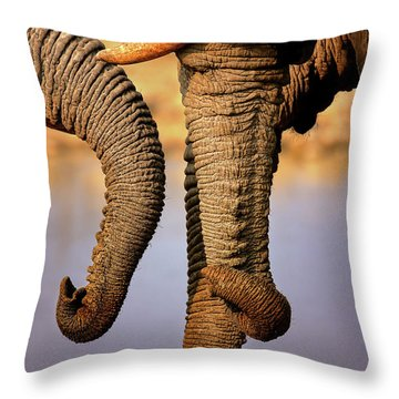 Elephant Trunks Interacting Close-up Throw Pillow