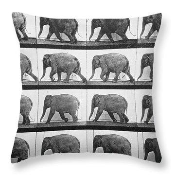 Elephant Walking Throw Pillow by Eadweard Muybridge