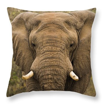 Elephant Watching Throw Pillow
