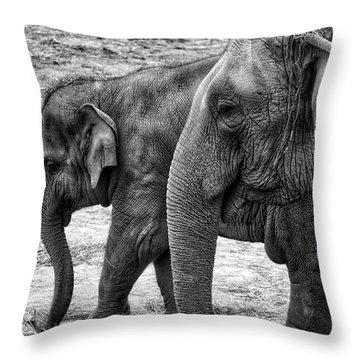 Elephants Bw Throw Pillow