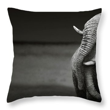 Elephants Interacting Throw Pillow