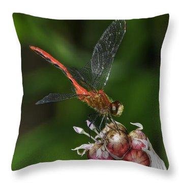 Eliza Skimmer Throw Pillow