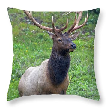 Throw Pillow featuring the photograph Elk 5 by Gary Lengyel
