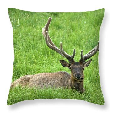 Throw Pillow featuring the photograph Elk 6 by Gary Lengyel