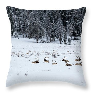 Elk - 9134 Throw Pillow
