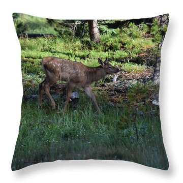 Baby Elk Rmnp Co Throw Pillow
